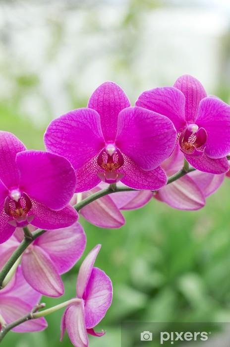 Naklejka Pixerstick Orchidea - Kwiaty