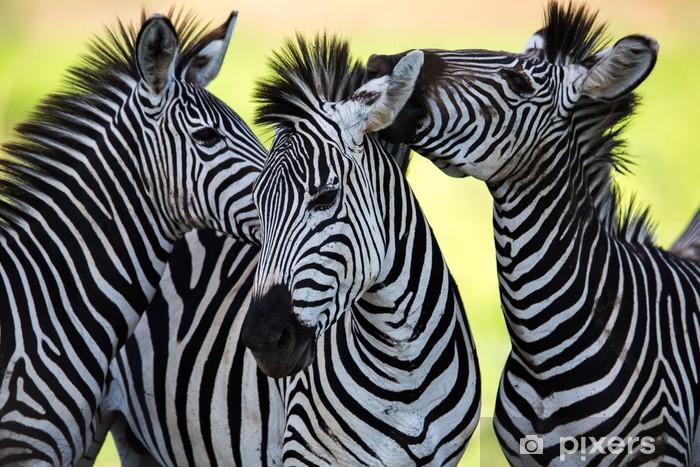 Zebras kissing and huddling Pixerstick Sticker - Animals
