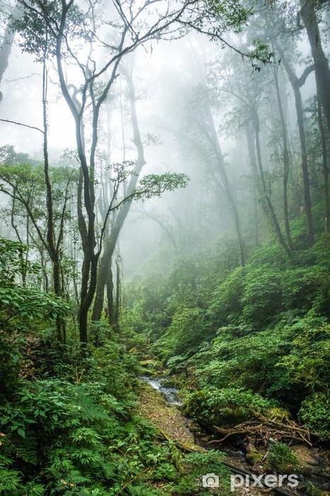 Vinyl-Fototapete Tropical regen Wald - Themen