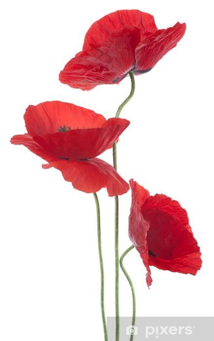 Fototapeta winylowa Mak - Kwiaty