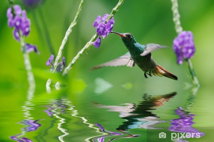 Beautiful hummingbird in reflection Vinyl Wall Mural - Birds
