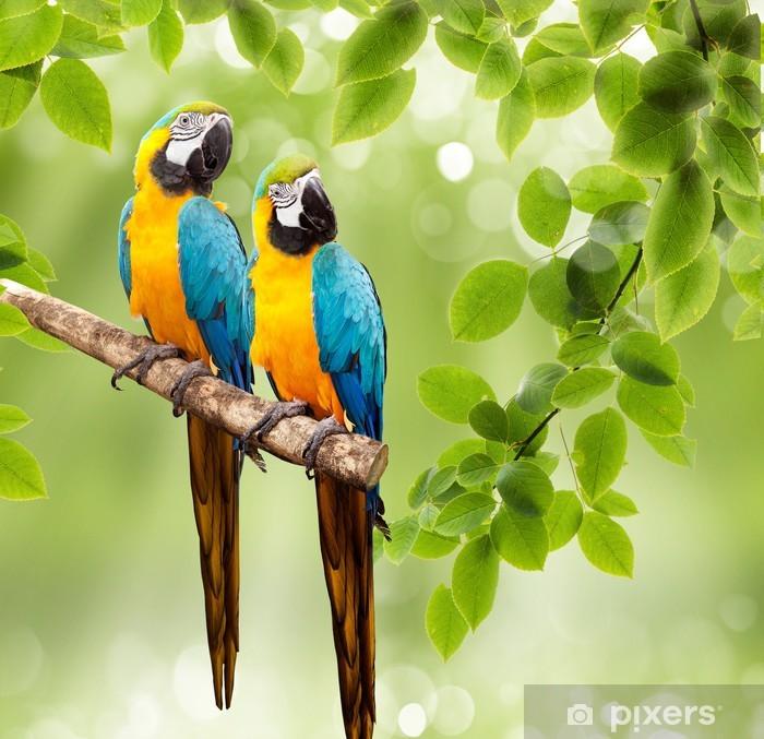 Naklejka Pixerstick Papuga ara na drzewie - Brazylia