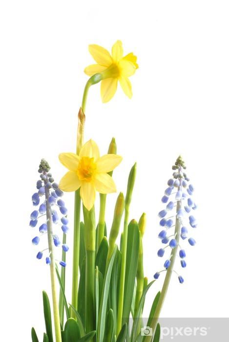 Fototapeta winylowa Wiosenne kwiaty na Wielkanoc, rośliny cebulowe - Kwiaty