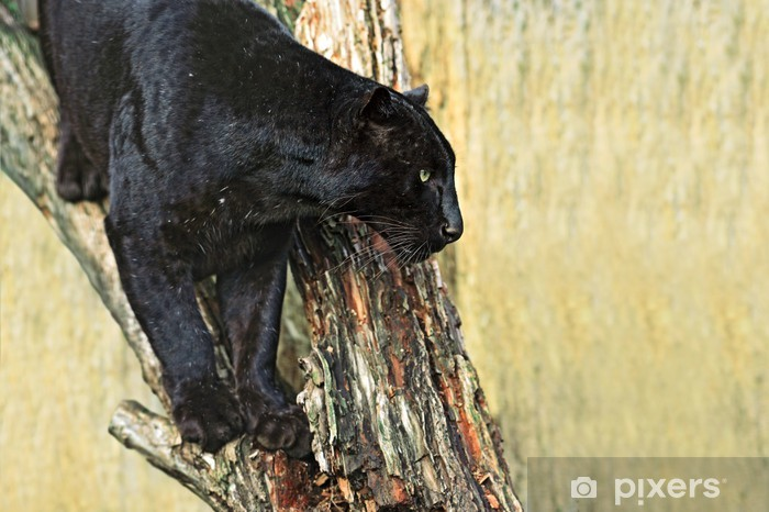 Pixerstick Aufkleber Leopard - Säugetiere