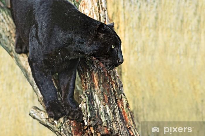 Vinyl-Fototapete Leopard - Säugetiere