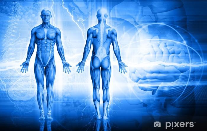 Vinyl Fotobehang Menselijk lichaam - Gezondheid en Geneeskunde
