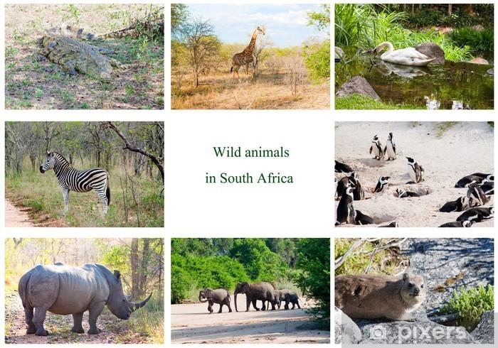 Fotomural Animales salvajes africanos collage, Sudáfrica • Pixers ...