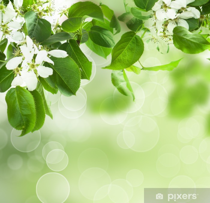 Poster Fleur de printemps - la frontière florale de feuilles vertes - Saisons