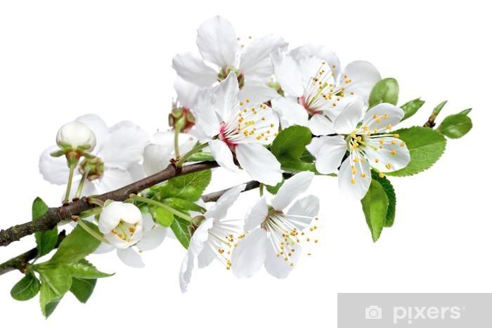 Carta Da Parati Fiore Di Primavera Isolato Su Uno Sfondo Bianco