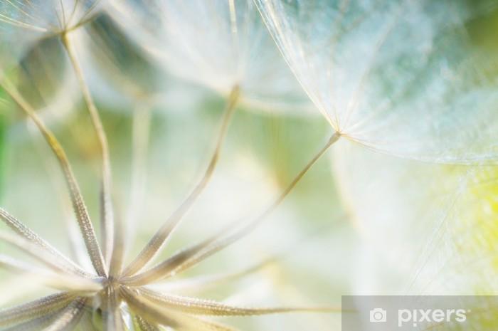 Papier peint lavable Pissenlit abstrait détail fleur fond, gros plan avec f douce - Thèmes