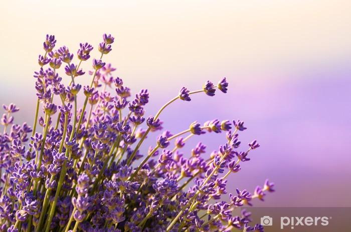 Papier peint vinyle Fleurs de lavande fleurissent l'heure d'été - Herbes