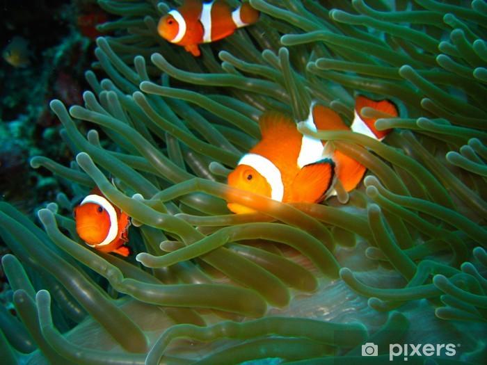 Sticker Pixerstick Tropical clown fish - Animaux marins