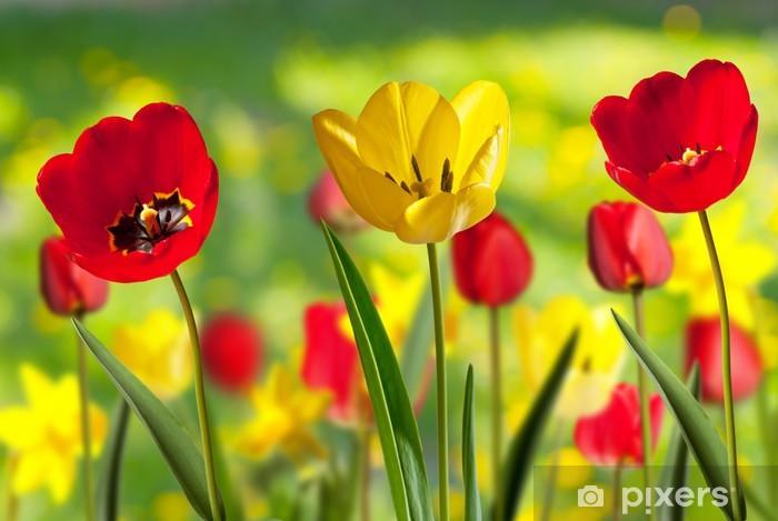 Fototapeta winylowa Tulipany - Tematy