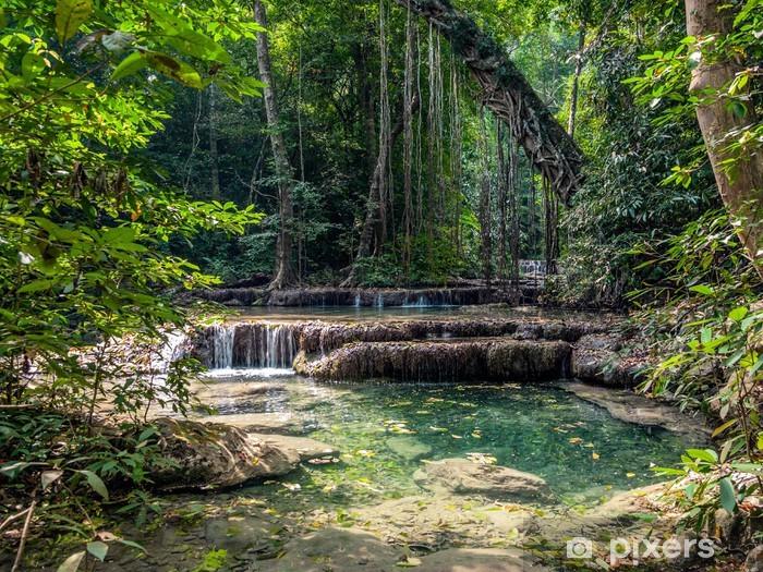 Fototapet av Vinyl Lianer i regnskogen. Erawan National Park i Thailand - Teman