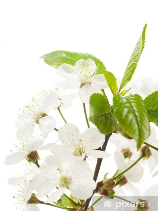 Fotomural Estándar Muelle - Flores