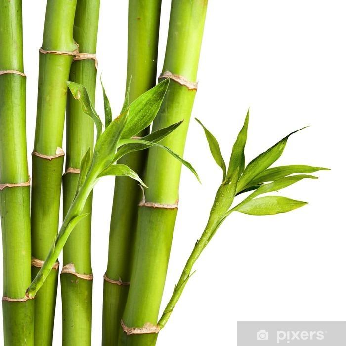 La Foglia Di Bamb.Carta Da Parati Autoadesiva Bambu E Foglie Di Bambu Su Sfondo Bianco