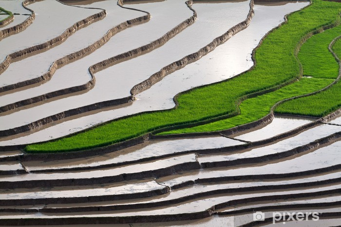Papier peint vinyle Rizières en terrasses avec de l'eau à Mu Cang Chai, Yen Bai, systè - Styles