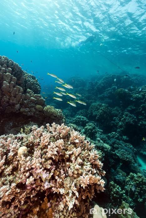 Naklejka Pixerstick Ryby i tropikalne rafy w Morzu Czerwonym. - Zwierzęta żyjące pod wodą