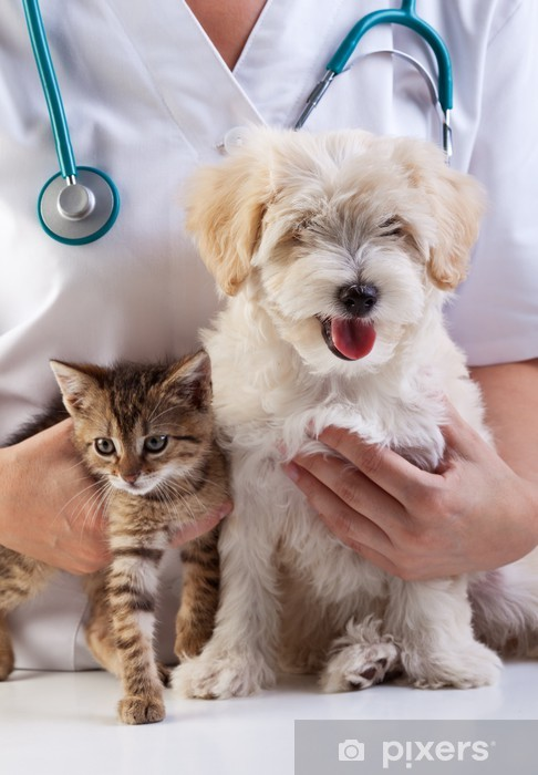 Little dog and cat at the veterinary Fridge Sticker - Health and Medicine