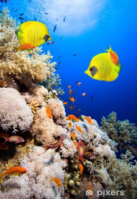 Fototapeta samoprzylepna Rafa koralowa i Masked Butterfly Fish - Rafa koralowa