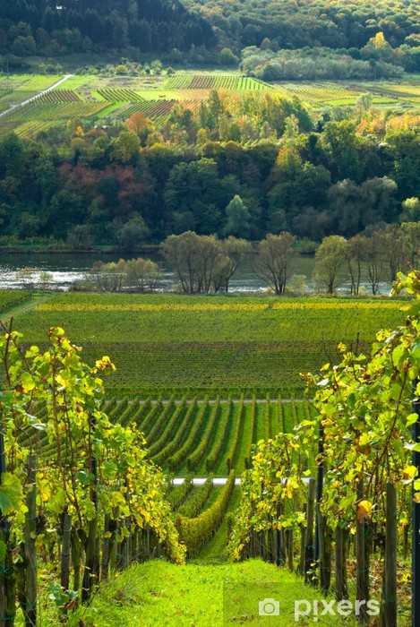 vineyards and forest Self-Adhesive Wall Mural - Destinations