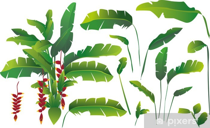 180d2112c4e1 vector set of exotic tropical banana leaves Wall Mural - Vinyl