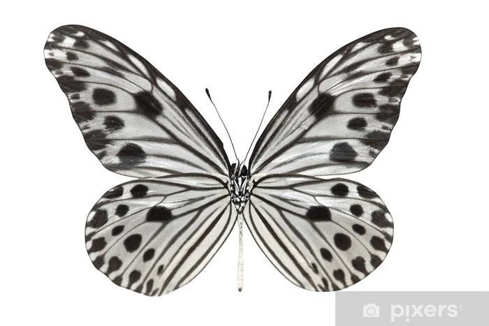 Fototapeta winylowa Butterfly (lynceus Idea) - Inne Inne