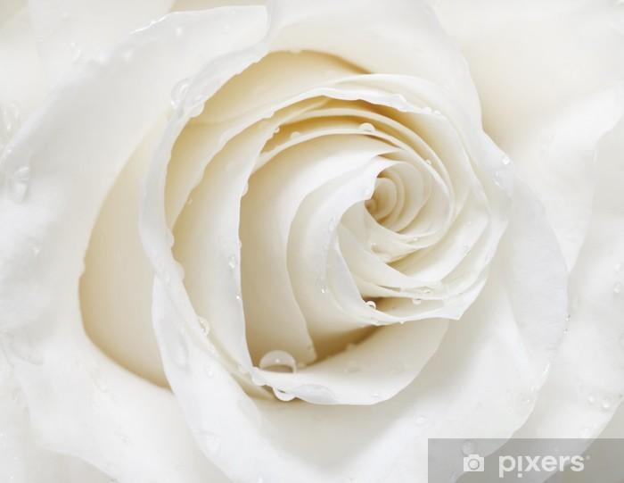 Papier peint vinyle Rose white - iStaging