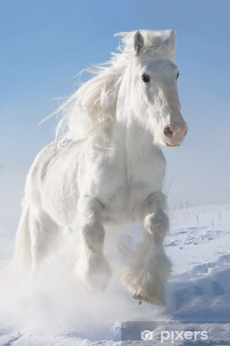White Horse Runs Gallop In Winter Wall Mural Pixers