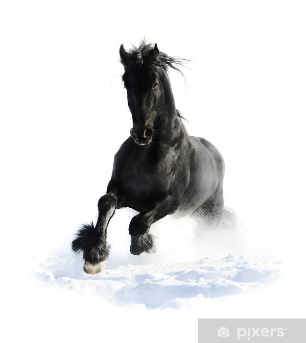 Fotomural Estándar Caballo negro corre al galope en el invierno en el blanco - Vinilo para pared