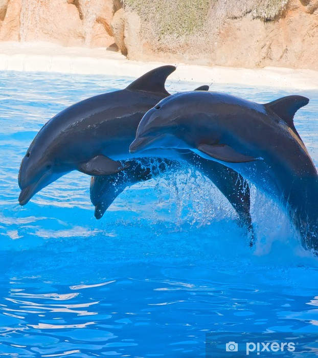 Papier peint vinyle Spectacle de dauphins - Thèmes