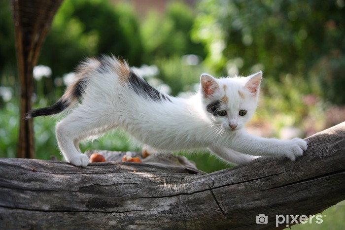 Fototapeta winylowa Mały biały kotek zarysowania gałęzi drzewa - Tematy
