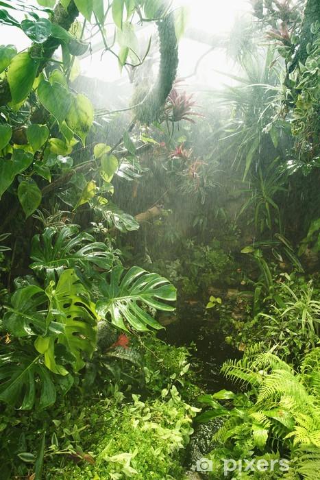 Tropisk regnskov Vinyl fototapet -