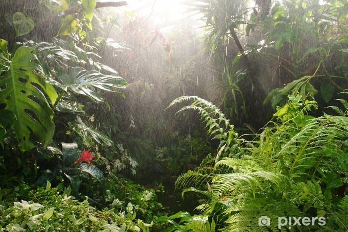 Tropisk regnskov Vinyl fototapet - Natur og Vildmark