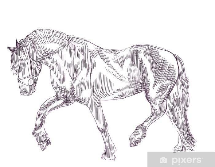 37 pferde bilder gezeichnet  besten bilder von ausmalbilder