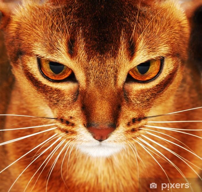 Nálepka Pixerstick Habešská kočka detailní - Témata