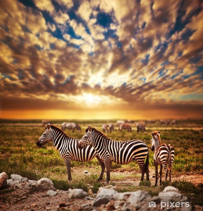 Fototapeta winylowa Zebry afrykańskiej sawanny stado na zachodzie słońca. safari w Serengeti - Style