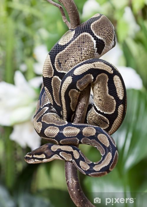 Naklejka Pixerstick Królewski Python snake - Inne Inne