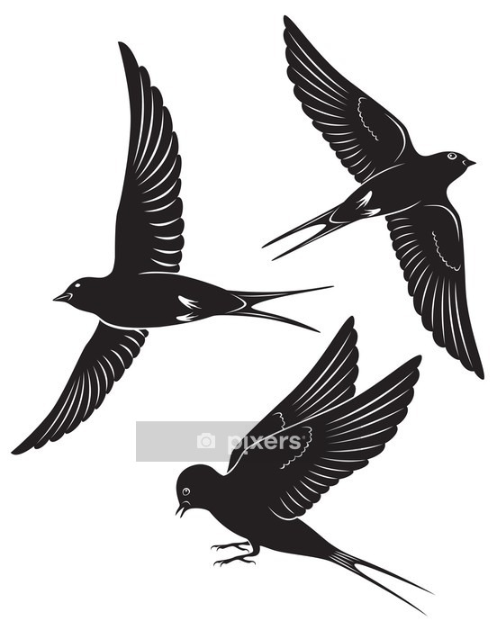 bird swallow Wall Decal - Styles