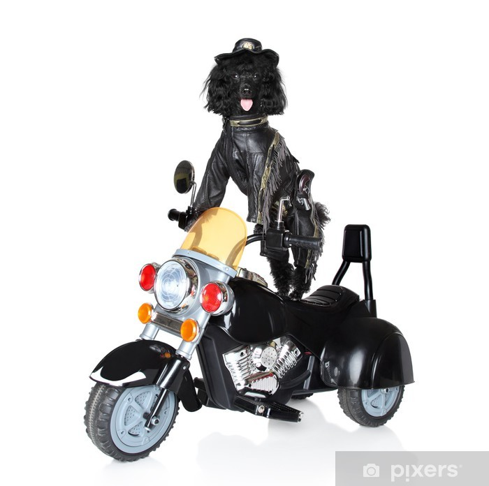 Dog riding on a motorcycle Vinyl Wall Mural - Mammals