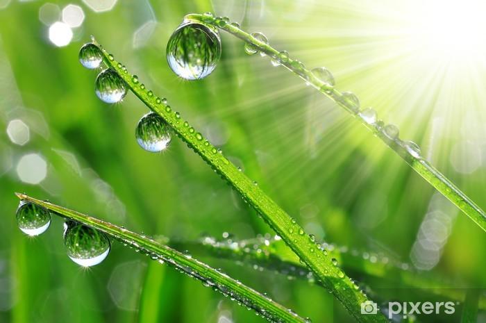 Fototapeta winylowa Świeża trawa krople rosy z bliska - Pory roku