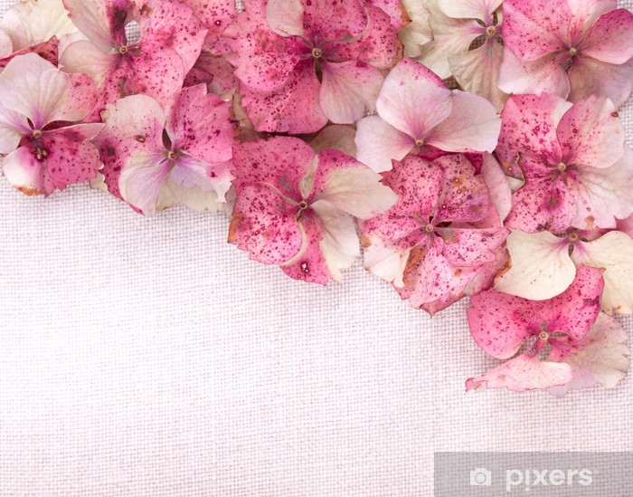 Hydrangea flower petals on fabric background Pixerstick Sticker - Flowers