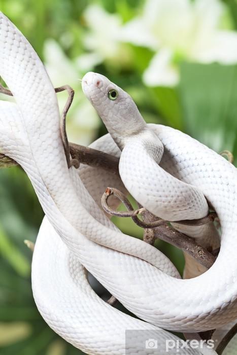 Afwasbaar Fotobehang Texas ratten slang - Andere Andere