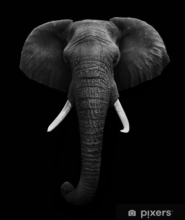 African Elephant isolated Vinyl Wall Mural - Styles