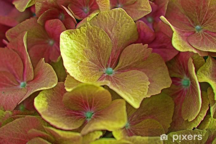 Fototapeta winylowa Hortensienblüte - Kwiaty