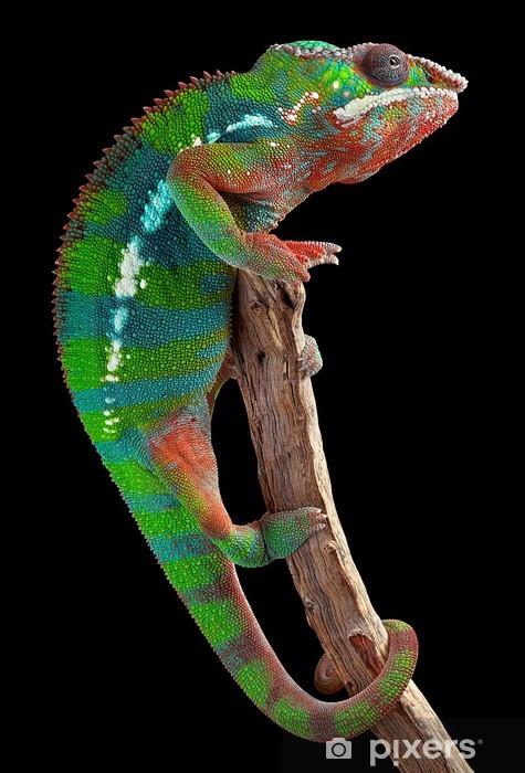 Panther chameleon on branch Pixerstick Sticker - Themes