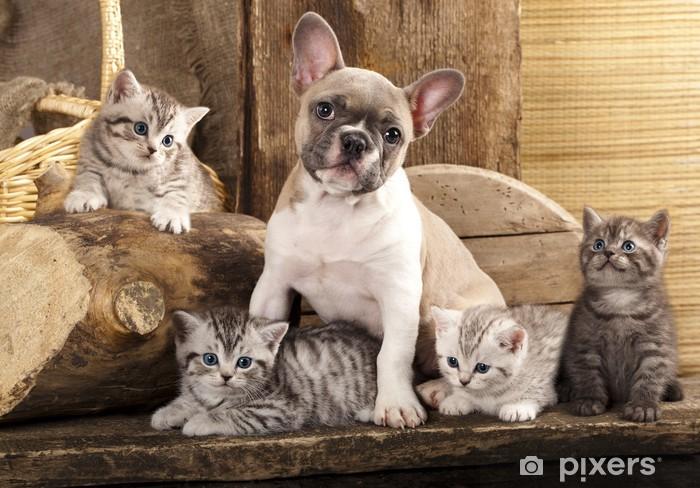 Cat and dog, British kittens and French Bulldog Pixerstick Sticker - Themes