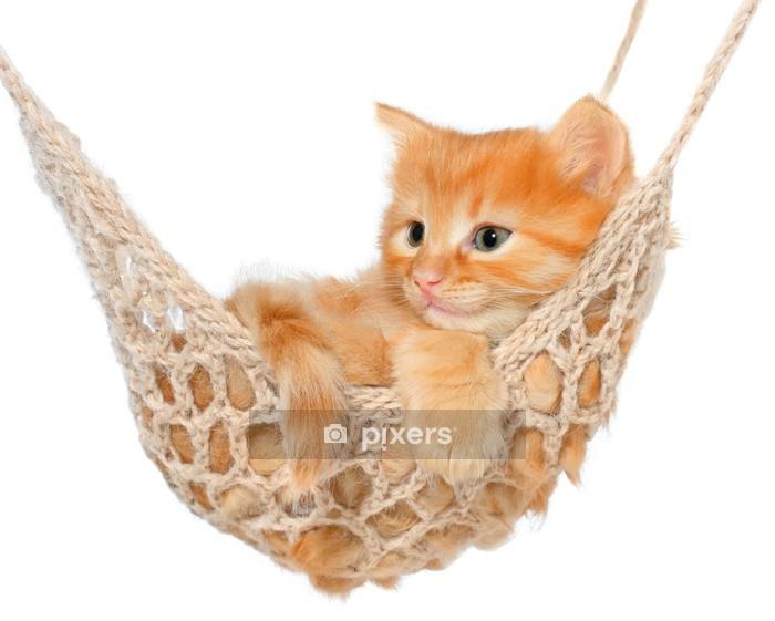 Muursticker Schattige roodharige kitten in hangmat - Zoogdieren
