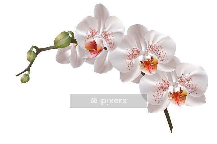 Sticker mural Blanc fleurs d'orchidée - Sticker mural