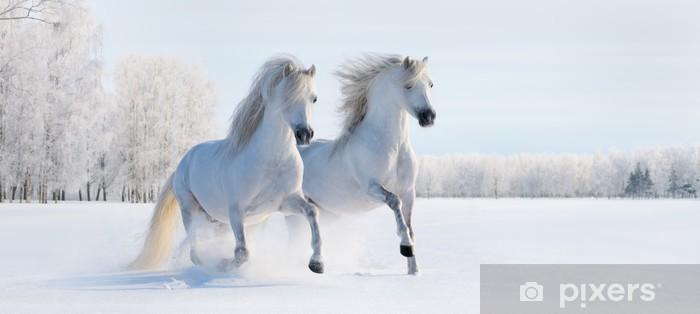 Fototapeta winylowa Dwa białe kucyki galopujący - iStaging